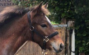 Helen-Bell-Equestrian-youngstock